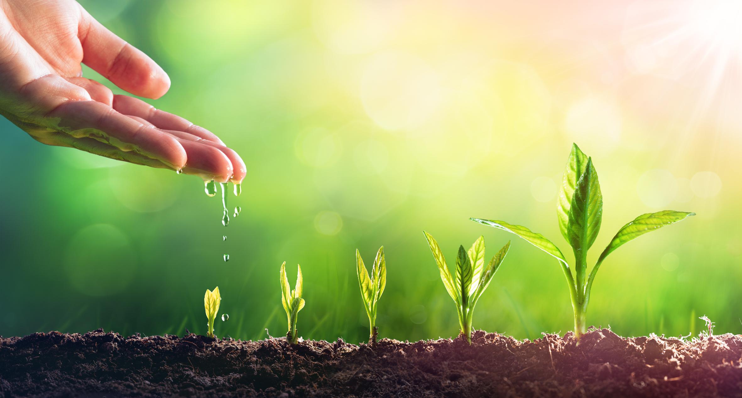 אור חדש זרעים